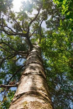 How 'Phytomining' — Metal-Eating Trees — Could Help Power The Future